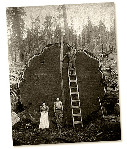 Old logging photo