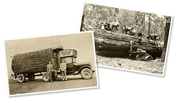 Old logging photos