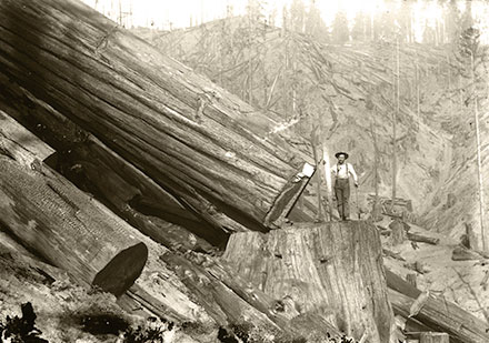 Vintage logging photo