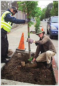 Sierra Club tree planting